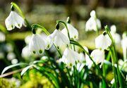 La mulţi ani de 1 Martie 2021: O primăvară frumoasă