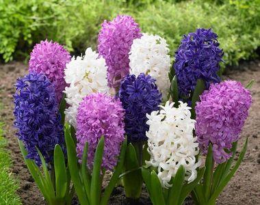VIDEO - Serele au flori pentru toate gusturile și buzunarele în martie