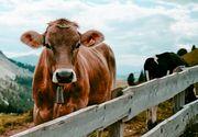 Cum poți câștiga bani din creșterea animalelor