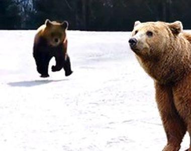 VIDEO-Turiști față în față cu ursul. Un instructor de ski a filmat tot