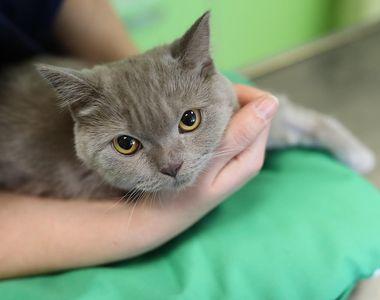 Caz unic în toată lumea: O pisică s-a infectat cu COVID-19