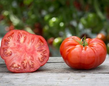 VIDEO- Delicioasele roșii românești, aproape coapte și gata de vânzare