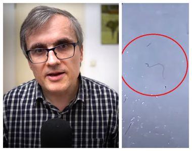 Viermi în masca de protecție? Fizicianul Cristian Presură a reluat experimentul - VIDEO