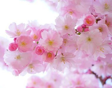 Ce nume de flori sunt sărbătorite în Duminica Floriilor