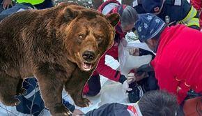 VIDEO-O ursoaică l-a ucis pe tânărul sportiv care căuta coarne de cerb