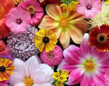 Ce nume se sărbătoresc de Florii. Sigur nu știai cui să-i trimiți mesaj de felicitare