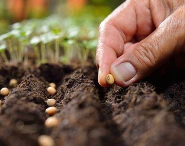 Amenajeaza rapid o gradină cu seminte legume de la Esenzi!