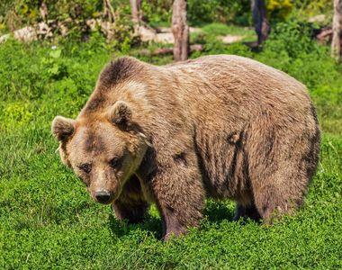 Un alt caz șochează România. Cadavrul unui urs a fost descoperit în curtea unei cabane