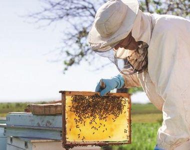 A murit un cunoscut om de afaceri din România, după ce a fost înțepat de albine