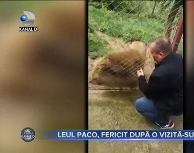 LEUL PACO, FERICIT DUPĂ O VIZITĂ-SURPRIZĂ