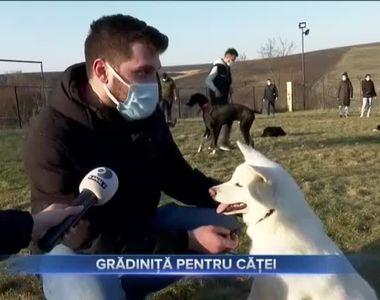 VIDEO - Specialiștii susțin că dresajul îi ajută pe câini să aibă personalitate