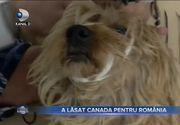 VIDEO - Pandemia a adus acasă peste un milion de români plecați în străinătate