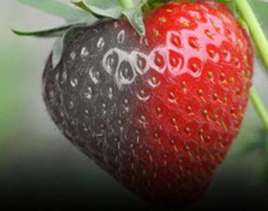 VIDEO - Căpșunele dulci din piețele românești, mai pline de chimicale decât de vitamine