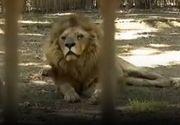 VIDEO - Anchete la Parcul Zoo din Brăila după zeci de plângeri de la cetățeni