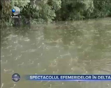 VIDEO - Natura a oferit  un spectacol unic în Delta Dunării, cu efemeride