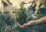 Ce trebuie să știi înainte de a pregăti o grădină