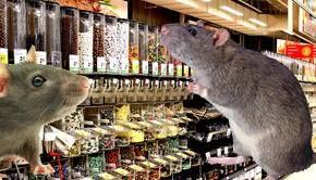 VIDEO - Invazie de șobolani în Capitală. Rozătoarele au ajuns în magazine