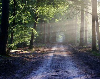 Guvernul a aprobat o OUG pentru înfiinţarea Gărzii Forestiere Naţionale