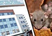 VIDEO   INCREDIBIL! Invazie  de șobolani la Spitalul pentru Copii Grigore Alexandrescu