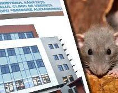 VIDEO | INCREDIBIL! Invazie  de șobolani la Spitalul pentru Copii Grigore Alexandrescu