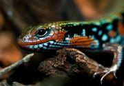 Ce înseamnă când visezi o reptilă?
