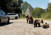 Bărbat din București, amendat cu 500 de lei pentru că a hrănit urșii în zona barajului Vidraru