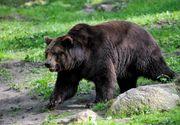 Bărbat atacat de urs în Prahova, salvat de câini