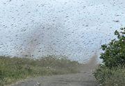 """Coșmarul ,,tornadei"""" de țânțari acoperă cerul Rusiei"""
