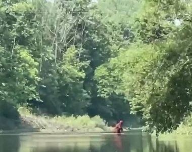 Un bărbat susține că l-a filmat pe Bigfoot cărându-și puiul de-a lungul unui râu