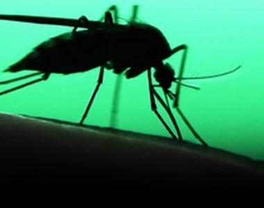 VIDEO - Un bărbat a fost diagnosticat cu malarie, după ce a călătorit în Africa
