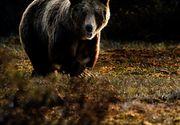 15.000 de euro despăgubire pentru o persoană atacată de urs
