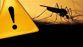 Ţânţari purtători ai virusului West Nile, depistaţi în Bucureşti