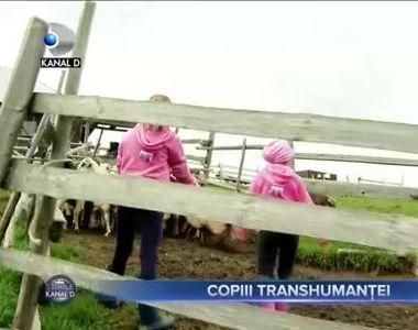 Copiii transhumantei
