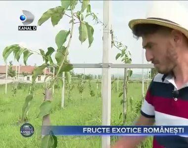 Fructe exotice romanesti
