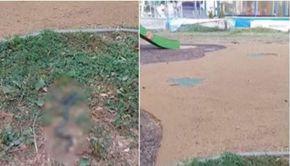 Șarpe de un metru într-un parc din Capitală. A fost surprins chiar la locul de joacă pentru copii