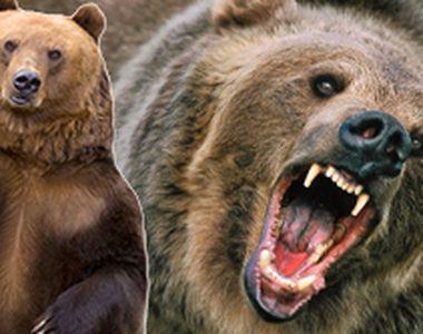 VIDEO | Unbărbat a fost la un pas de moarte după ce a fost atacat de un urs pe care...