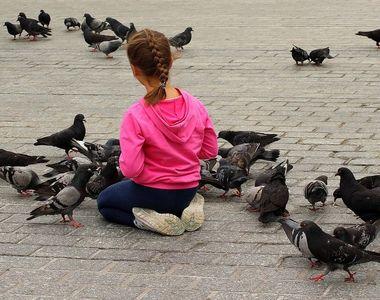 VIDEO   Amenzi usturătoare pentru hrănirea porumbeilor. Ce oraș a luat această măsură