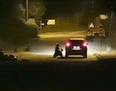 VIDEO   O ursoaică, filmată în timp ce atacă o mașină în mișcare, la Bușteni