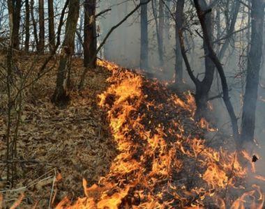 Sute de persoane au fost evacuate, în urma unui incendiu de pădure