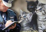 VIDEO | Un bărbat din București, amendat după ce a abandonat 5 pui de pisică pe stradă. Ce sancțiune a primit