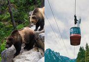 Zece oameni au rămas blocaţi în telecabină din cauza unui urs