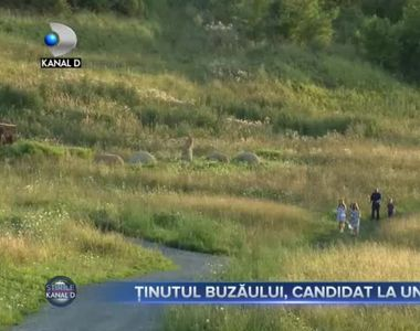 Tinutul Buzaului, candidat la UNESCO
