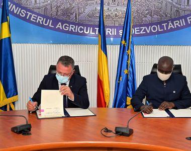 Congo vrea să importe cantităţi mari de cereale din România