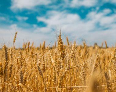 Din cauza secetei, fermierii români vor înlocui culturile tradiționale cu unele...