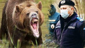 VIDEO | Atacurile urșilor, tot mai furibunde