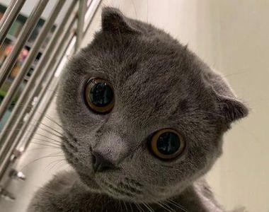 VIDEO | Operație în premieră, în România. O pisică ce suferea de o afecțiune extrem de...
