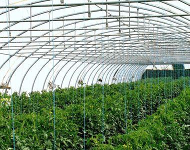 De ce să folosești plasa de umbrire pentru recoltele de legume