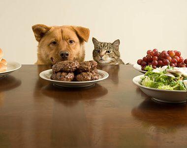 Carnea de câine și de pisică ar putea fi interzisă, a anunțat Preşedintele sud-coreean...