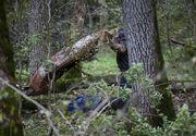 Un bărbat a fost grav rănit după ce un copac a căzut peste el