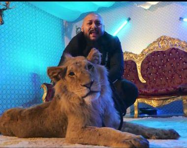 Unde a ajuns animalul rănit și subnutrit, din videoclipul manelistului Dani Mocanu....